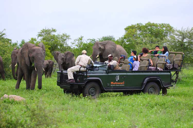 Game Drive - Elephant - Geiger's Camp