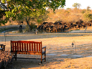 Wildlife waterhole Timbavati Kambaku Safari Lodge Timbavati Game Reserve South Africa