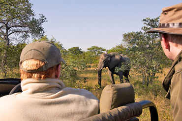 Elephant sighting game drives Shindzela Tented Camp Timbavati Game Reserve South Africa