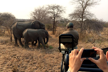 Umlani Bushcamp Game Drive sighting Elephants Timbavati Game Reserve Accommodation Safari Bookings